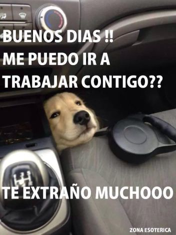 Encuentra Los Mejores Memes De Buenos Dias Amor Para Compartir Con Tus Amigos Y Familiares Y Pasar Un Buen Rato Buenos Dias Perros Perros Frases Memes Perros