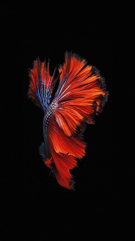 Apple Ios9 Fish Live Background Dark Red Wallpaper Hd Iphone