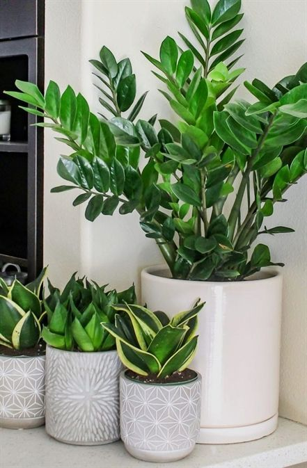 Plant Seeds Grow Box Succulent Plants Jade Plants Vs Zombies