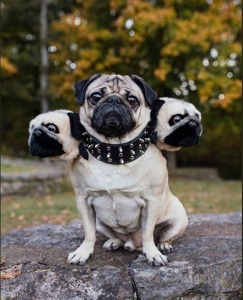 CERBERUS SWEATSHIRT PULLOVER SWEATER Dog Hound of Hades Underworld Heracles