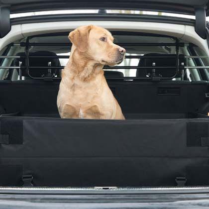 Pin Auf Autozubehoer Hunde