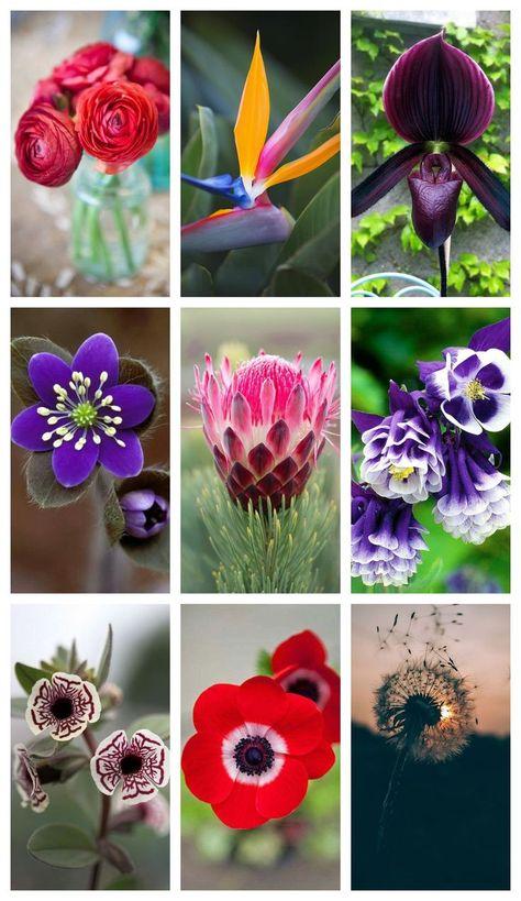 Schone Blumen Fur Unseren Garten Arten Von Blumen Rot Weiss Grun