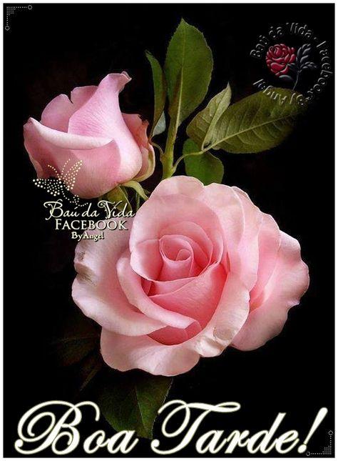 Bau Da Vida Rosas Flores Bonitas Amor Flores