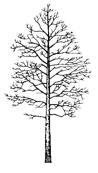 Aspen Determination And Overcoming Fears And Doubts Tattoos Tree