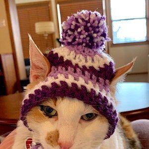 Cat Sombrero Sombrero For Cats Sombrero Hat With Ear Holes Etsy Cat Halloween Costume Cat Bandana Small Dog Bows
