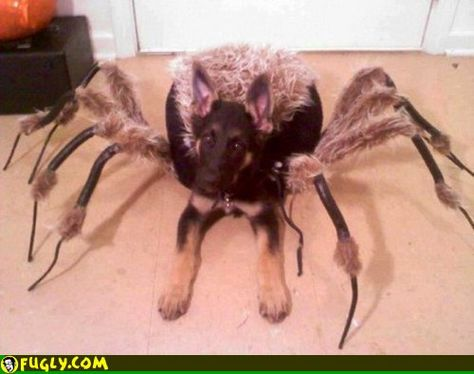 LOL!  Spider Dog Costume  - wow, that is creepy, I hate spiders!!!