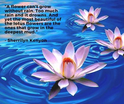 beautiful lotus flower quotes enkiquotes lotus flower quote