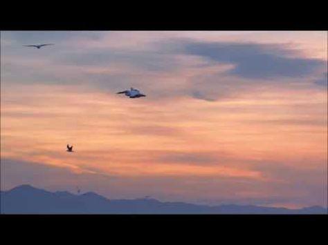 Birds at sunset - Ptaki o zachodzie - YouTube