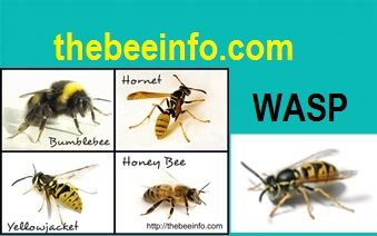 What Are The 7 Different Kinds Of Bees 176 Bee Bee Bee Problem Types Of Bees