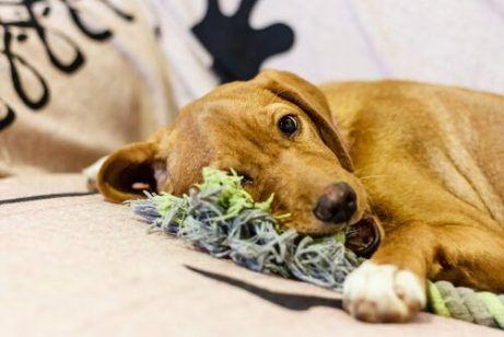 Mache Spielzeug Aus Alter Kleidung Fur Deinen Hund Deine Tiere Hund Diy Hunde Spielzeug Diy Hunde