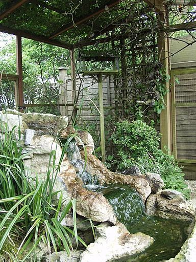 Outdoor finch garden aviary complete with waterfall. Imagine having this in your outdoor space.