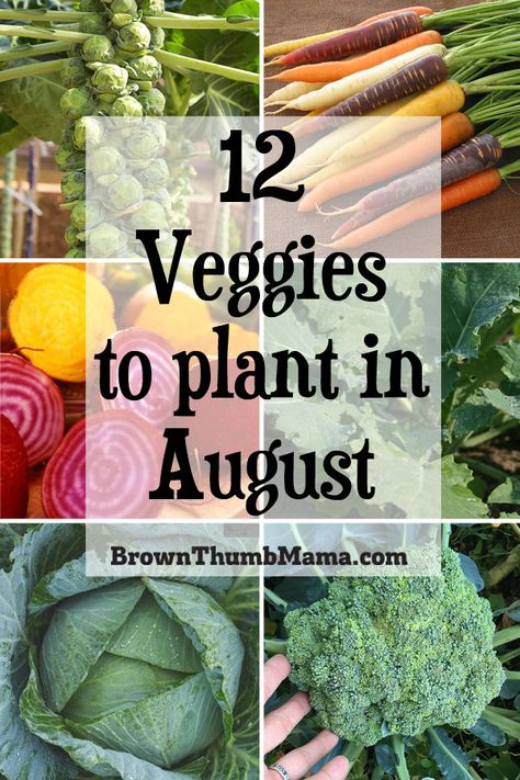 There are lots of vegetables you can plant in August. Even though it's hot outside, these twelve vegetables can handle the heat and will give you a tasty harvest this fall and winter. Includes recommended varieties and planting tips. Organic Vegetable Seeds, Vegetable Garden Tips, Veg Garden, Fruit Garden, Organic Vegetables, Edible Garden, Growing Vegetables, Garden Beds, Winter Vegetables