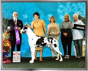 Great Dane Stud Dogs Fleckenhaus Aries Great Dane Dane