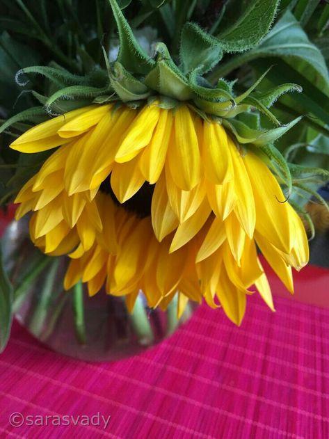 Nomi Di Fiori Gialli.Pin Di Kikilica Su Flowers Girasoli Fiori