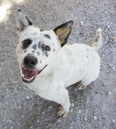 Adopt Poe On Dog Adoption Help Homeless Pets Homeless Pets