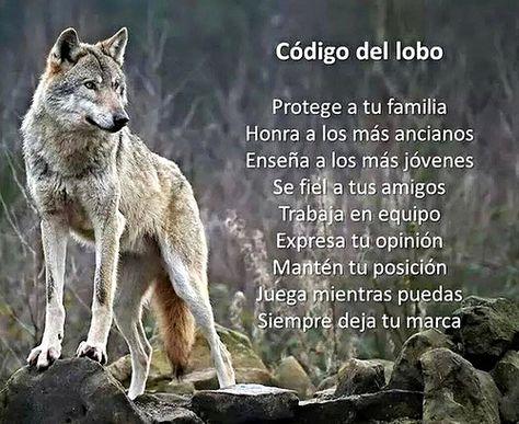 Código Lobo en una manada - Mikel Agirregabiria