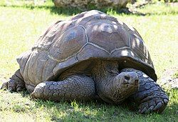 The Amazing Galapagos Tortoise Via Galapaguides Photo On - Jonathan tortoise mind blowing 182 years old