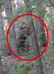 53 Best Bigfoot Real Or Fake Images Bigfoot Sasquatch Finding