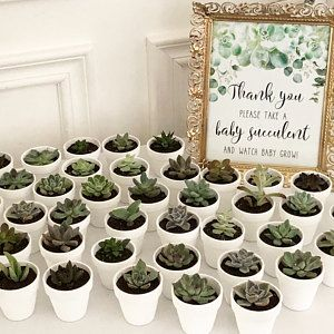 Watch Baby Grow Sign Succulent Favors Printable Peach | Etsy