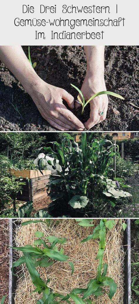 Die Drei Schwestern In 2020 Mit Bildern Drei Schwestern Kurbis Pflanzen Bohnen Pflanzen