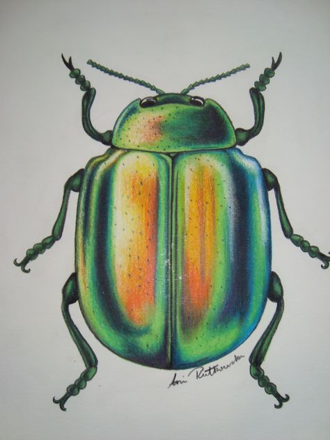 pencil crayon green beetle in 2019 | Pencil drawings ...