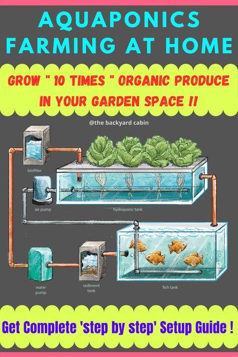 Aquaponics Farming at Home | 100% Organic | Get Complete Setup Guide