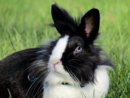 Rabbit Images Pixabay Download Free Pictures Rabbits