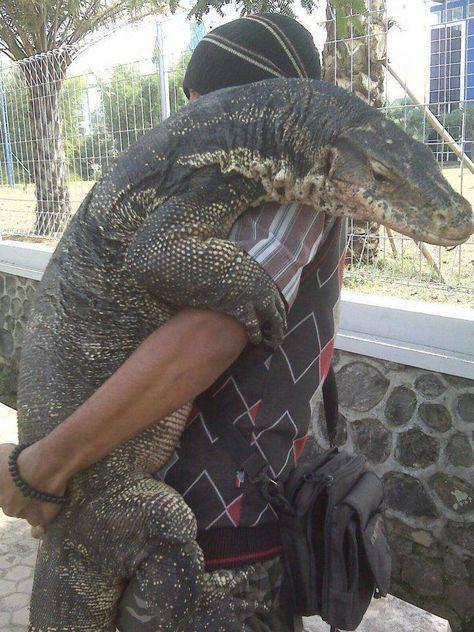 Hugs make everything better!!!    Komodo dragon and pal.