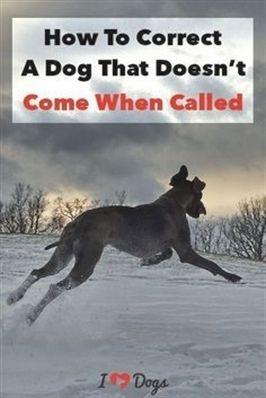 Dog Training Green Bay Dog Training 07882 Youtube Dog Training