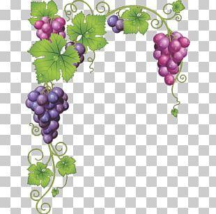 Common Grape Vine Wine Grape Leaves Png Clipart Border Branch Encapsulated Postscript Film Frame Flora Free Png Download Grape Vines Grapes Grape Leaves