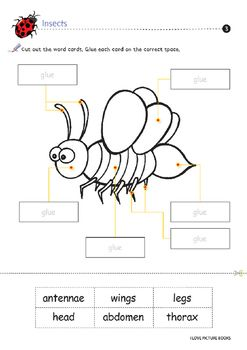 Insect Worksheets Activities Printables Worksheets Worksheets For Kids Activities