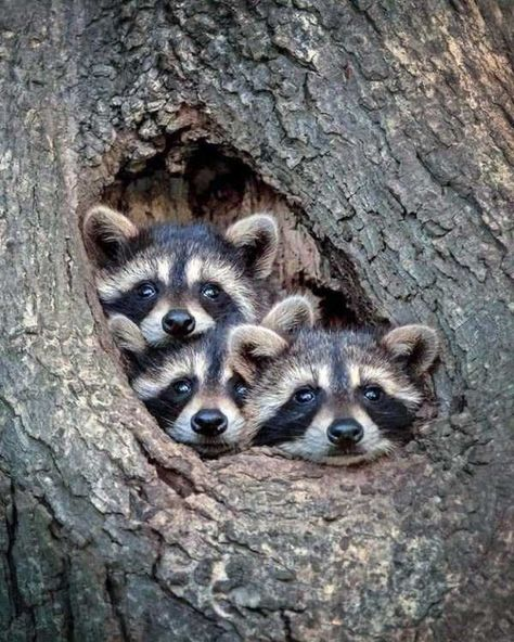 Breathtaking Portraits of Wild Animals by Kevin Biskaborn 65 baby animals that can fill your heart w Cute Baby Animals, Animals And Pets, Funny Animals, Strange Animals, Animals With Fur, Baby Wild Animals, Adorable Cute Animals, Animal Babies, Small Animals