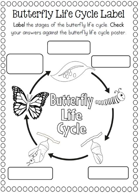 The 16 Best Images About Life Cycle Of A Butterfly On Pinterest