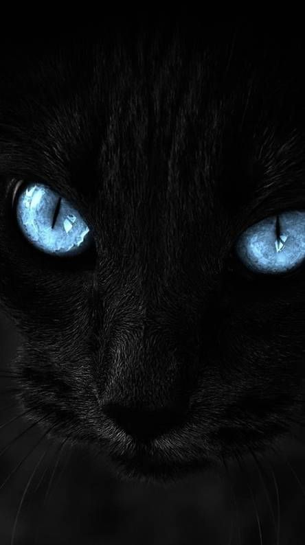 Pin By Y Rt On Wallpaper Beautiful Cats Black Cats Rock Cats And Kittens
