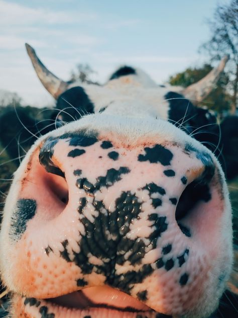 Animals 🙈 - Animals, animals wild, animals funny, animals cutest, animals and pets Cute Creatures, Beautiful Creatures, Animals Beautiful, Pretty Animals, Majestic Animals, Cute Little Animals, Cute Funny Animals, Fluffy Cows, Tier Wallpaper