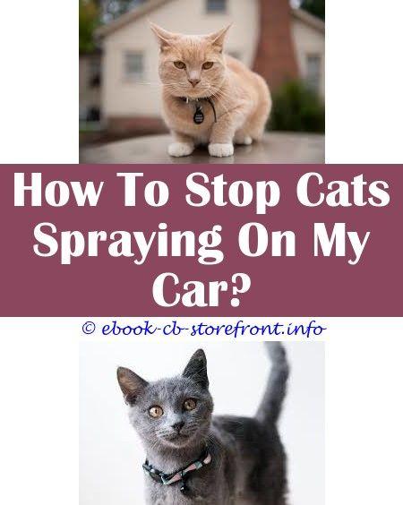 Cat Recite unfold Forbid Tts