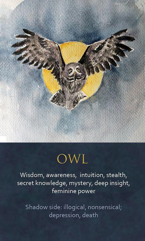 image slot Spirit Animal Totem, Animal Spirit Guides, Animal Meanings, Animal Symbolism, Power Animal, Animal Magic, Owl Quotes, Wisdom Quotes, Life Quotes