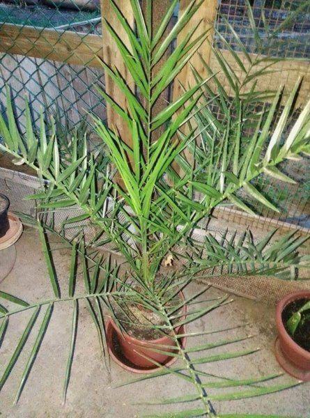 8 Szobanövény, amelyet vízben nevelhetsz