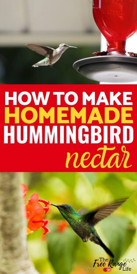 Easy Homemade Hummingbird Nectar Recipe Plus Faq And Tips
