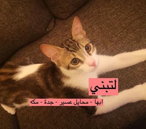 قط لتبني القط ليس لي النوع بلدي العمر شهور الجنس ذكر المواصفات لعوب وحبوب وسليم ونظيف جدا متعود على ا Cats Cats Pets Animals