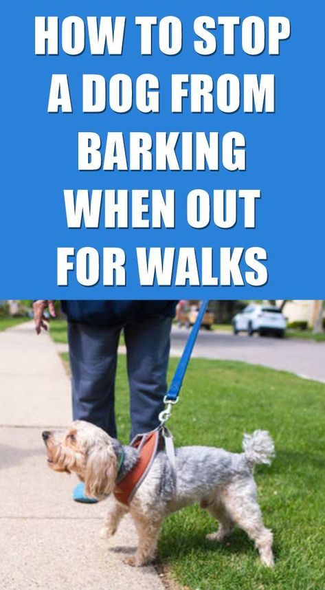 How To Stop My Dog Barking When Out Walking Dog Psychology Dog