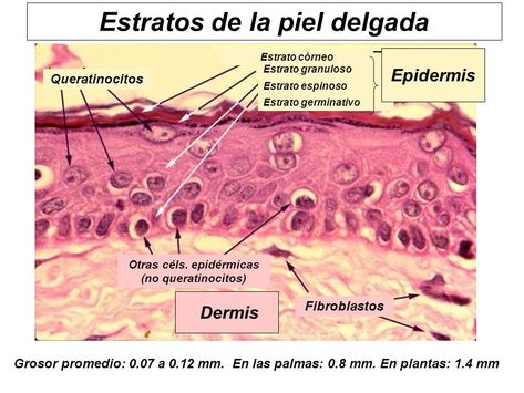 Pin En Dermotricologia