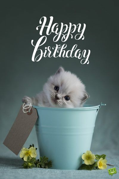Happy Birthday Kitten Images : happy, birthday, kitten, images, Birthday, Wishes, Someone's, Special, Happy, Cards,, Inspirational, Wishes,, Messages