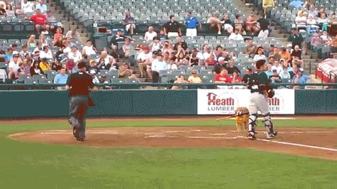 6ad12fd7957c9 29 reasons why Minor League Baseball is the best