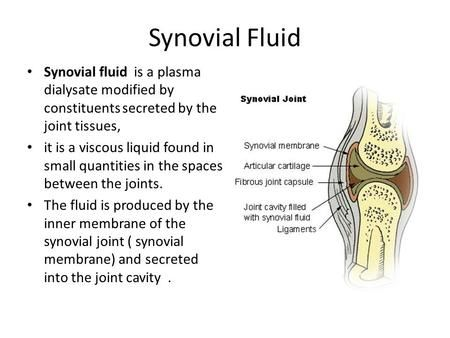39+ What joints have synovial fluid inspirations