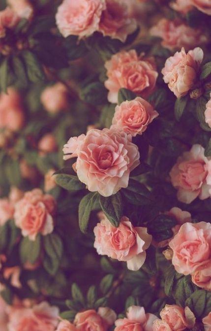 70 Ideas Wallpaper Iphone Vintage Flowers Tumblr Pink Roses Tumblr Flower Flower Aesthetic Flower Phone Wallpaper