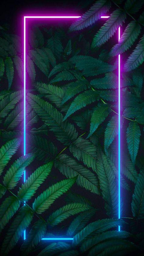 Neon Nature iPhone Wallpaper - iPhone Wallpapers
