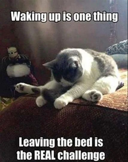 32 Funny Cat Pictures You Can Definitely Relate To Funny Animal Jokes Funny Animal Memes Funny Good Morning Memes
