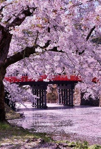 If You Re In The Fragrance Mist Lineup You May Want To Buy Up Everything You Can Now During The Start Of The Month Of Hirosaki Japan Travel Beautiful Places