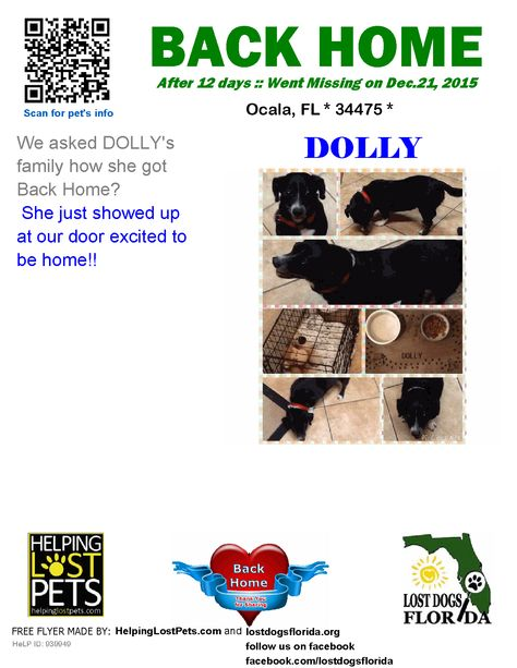 helping lost pets dog dachshund back home happy tails rh pinterest ca